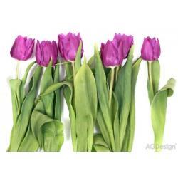 Fototapeta fialové tulipány 360 x 254 cm AG Design FTS 0065