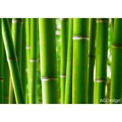 Fototapeta bambus 360 x 254 cm AG Design FTS 0170