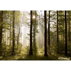 Fototapeta ranní les 360 x 254 cm AG Design FTS 0181