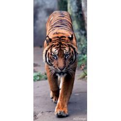 Fototapeta vliesová tygr 90 x 202 cm AG Design FTN V 2800