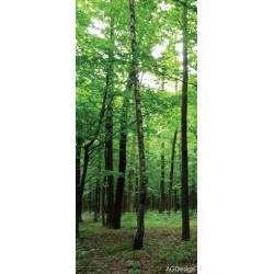 Fototapeta vliesová zelený les 90 x 202 cm AG Design FTN V 2920