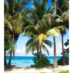 Fototapeta vliesová palmy na pláži 180 x 202 cm AG Design FTN XL 2510