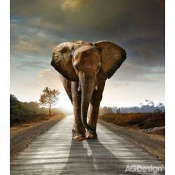 Fototapeta vliesová slon 180 x 202 cm AG Design FTN XL 2514