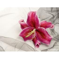 Fototapeta vliesová červená orchidej 330 x 255 cm AG Design FTN XXL 0112
