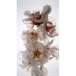 Fotozávěs Dimout květiny 140 x 245 cm AG Design FCP L 6506