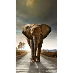 Fotozávěs Dimout slon 140 x 245 cm AG Design FCP L 6507