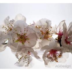 Fotozávěs Dimout květiny 280 x 245 cm AG Design FCP XXL 6409