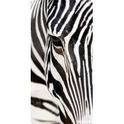 Obraz zebra 29 x 55 cm AG Design PD3501